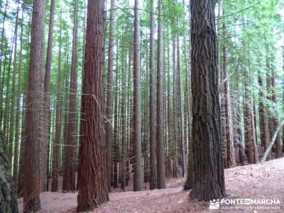 Ruta del Cares - Garganta Divina - Parque Nacional de los Picos de Europa; Secuoyas Bosque